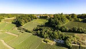 Nicolas Feuillatte 於 1976 年創立,雖與當地主要香檳莊相比年資最輕,但憑藉其卓越品質,現已成為法國第一香檳品牌,並擠身全球三甲之列。